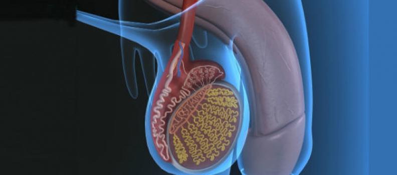 La importancia de tratar y conocer las enfermedades urológicas
