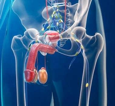 Enfermedades urológicas: un acercamiento